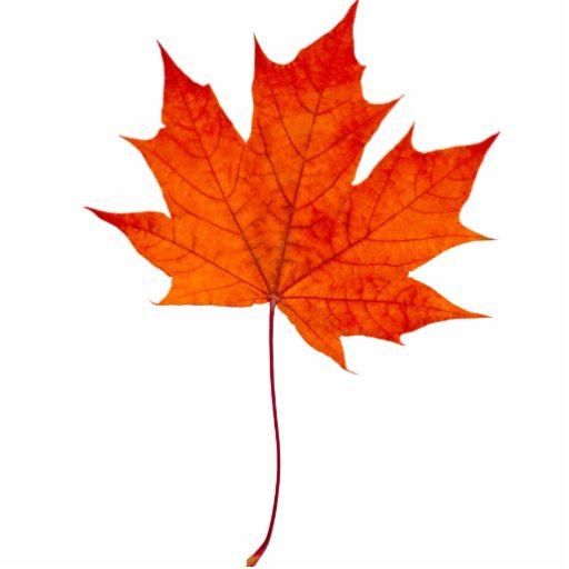 maple leaf foods leading six sigma Food safety technician at maple leaf foods inc,  director and ceo at leading innovation pty ltd,  lean six sigma black belt at safran turbomeca,.
