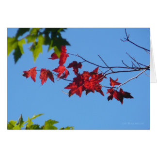 Red Maple Leaves Card