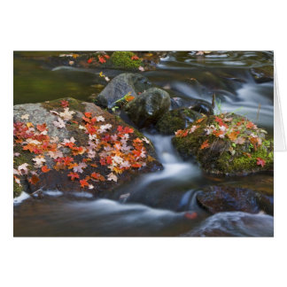 Red maple leaves carpet the rocks in the card