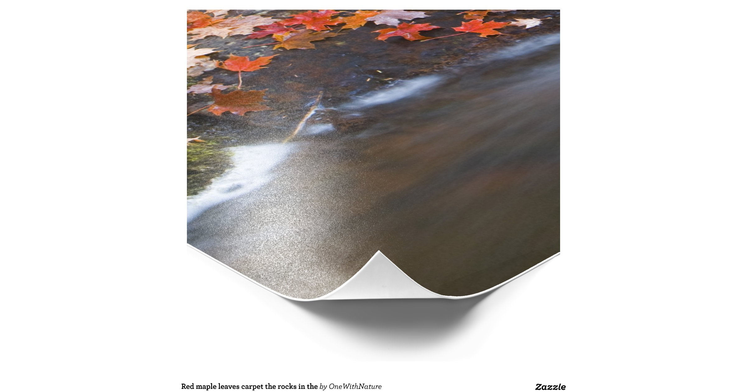 Red maple leaves carpet the rocks in the photo art : Zazzle