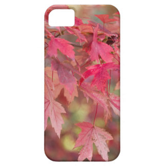 Red Maple Leaves Case For The iPhone 5