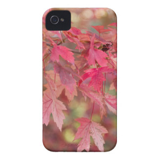 Red Maple Leaves iPhone 4 Case
