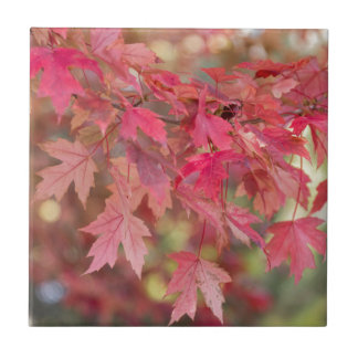 Red Maple Leaves Tiles