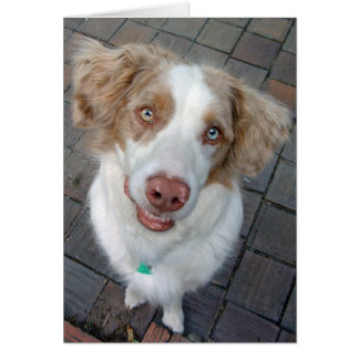 Red Merle Australian Shepherd Card