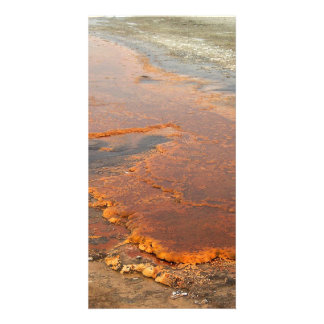Red Mineral Water Yellowstone Park Picture Card