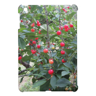 Red Montmorency cherries on tree in cherry orchard Case For The iPad Mini