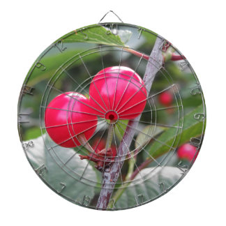 Red Montmorency cherries on tree in cherry orchard Dartboard