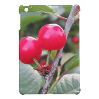 Red Montmorency cherries on tree in cherry orchard iPad Mini Cover