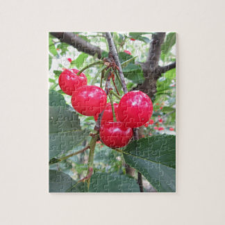 Red Montmorency cherries on tree in cherry orchard Jigsaw Puzzle