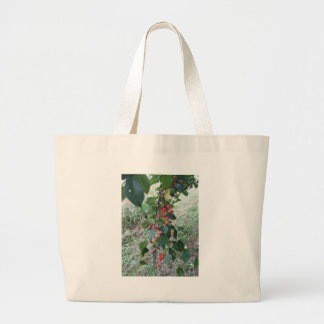 Red Montmorency cherries on tree in cherry orchard Large Tote Bag