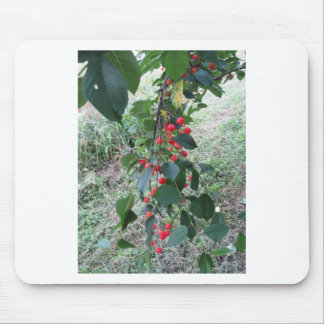 Red Montmorency cherries on tree in cherry orchard Mouse Pad