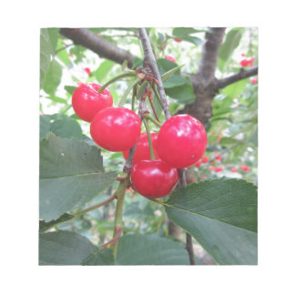 Red Montmorency cherries on tree in cherry orchard Notepad