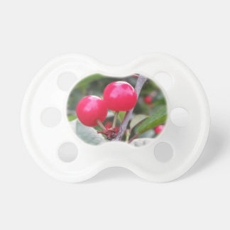 Red Montmorency cherries on tree in cherry orchard Pacifier