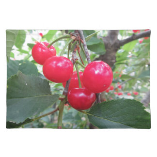 Red Montmorency cherries on tree in cherry orchard Placemat