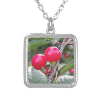 Red Montmorency cherries on tree in cherry orchard Silver Plated Necklace