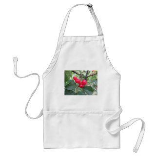 Red Montmorency cherries on tree in cherry orchard Standard Apron