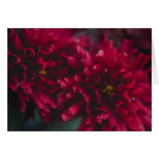 Red Mums Notecard