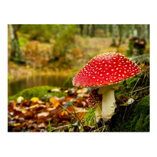 Red Mushroom Postcard