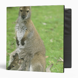 Red-necked Wallaby, Macropus rufogriseus), 3 Ring Binders
