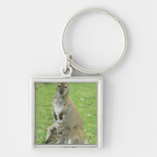 Red-necked Wallaby, Macropus rufogriseus), Silver-Colored Square Keychain