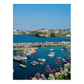 Red Newquay harbour, Cornwall, U.K. flowers Postcard