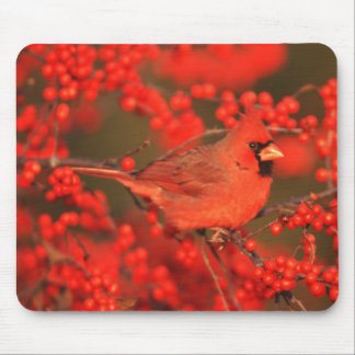 Red Northern Cardinal Male, IL Mouse Pad