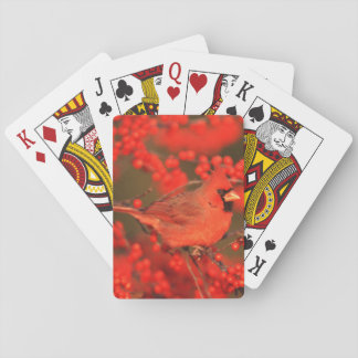 Red Northern Cardinal Male, IL Poker Deck