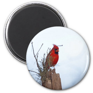 Red Northern Cardinal sitting on a wooden post Magnet