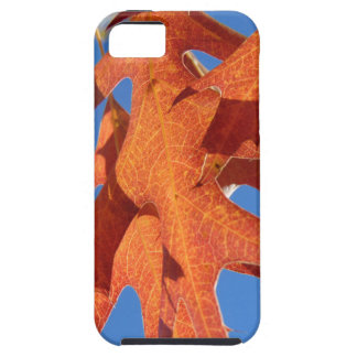 Red Oak Leaves iPhone 5 Covers