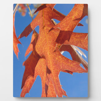 Red Oak Leaves Plaque