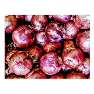 Red Onion Postcard