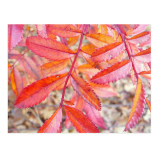 Red & orange leaves post card - Walden Pond shore