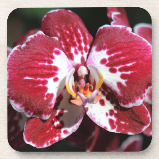 Red Orchid Beverage Coasters