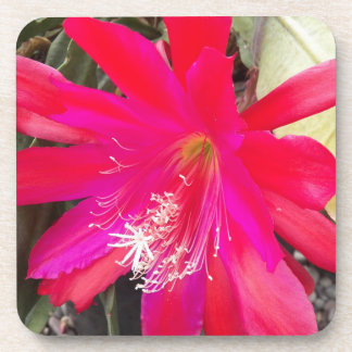 Red Orchid Cactus Bloom Floral Coaster