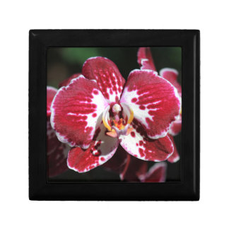 Red Orchid Gift Box
