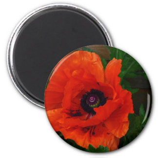 Red Oriental Poppy Magnet
