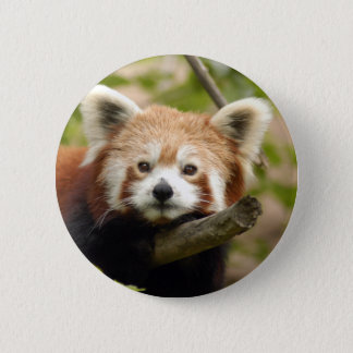 red-panda-007 2 inch round button