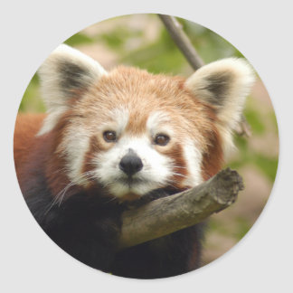 red-panda-007 classic round sticker