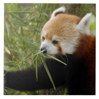 red-panda-031 tile
