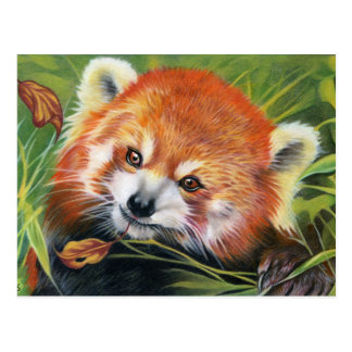Red Panda animal art postcard