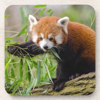 Red Panda Eating Green Leaf Coaster