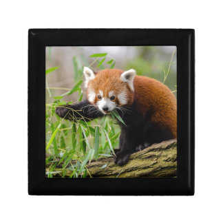 Red Panda Eating Green Leaf Gift Box