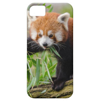 Red Panda Eating Green Leaf iPhone 5 Case