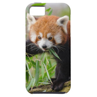Red Panda Eating Green Leaf iPhone 5 Covers
