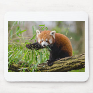Red Panda Eating Green Leaf Mouse Pad