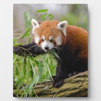 Red Panda Eating Green Leaf Plaque