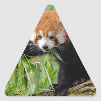 Red Panda Eating Green Leaf Triangle Sticker