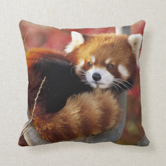 Red Panda In a Tree Throw Pillow