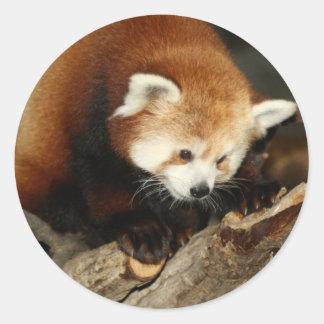 Red Panda Round Sticker