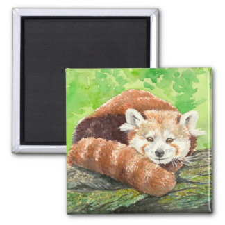 Red panda square magnet